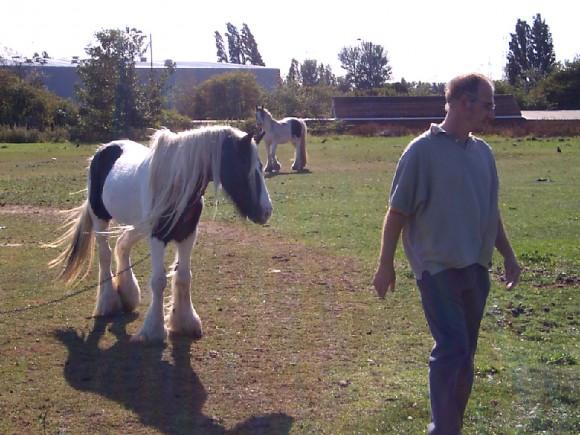 marsh lane fields horses