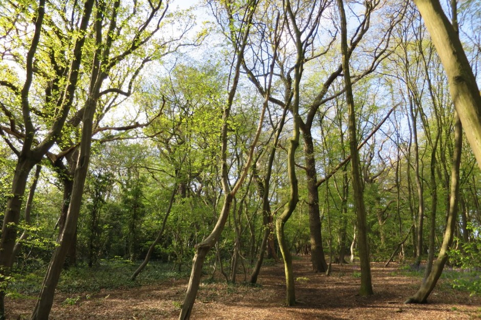 Larks Wood