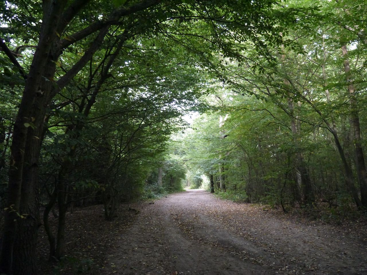 The forgotten forest of london the lost byway for Rainforest londra