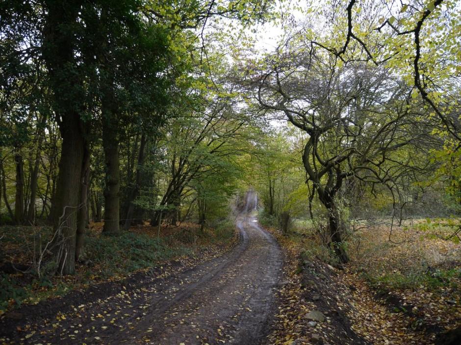 Epping Walk