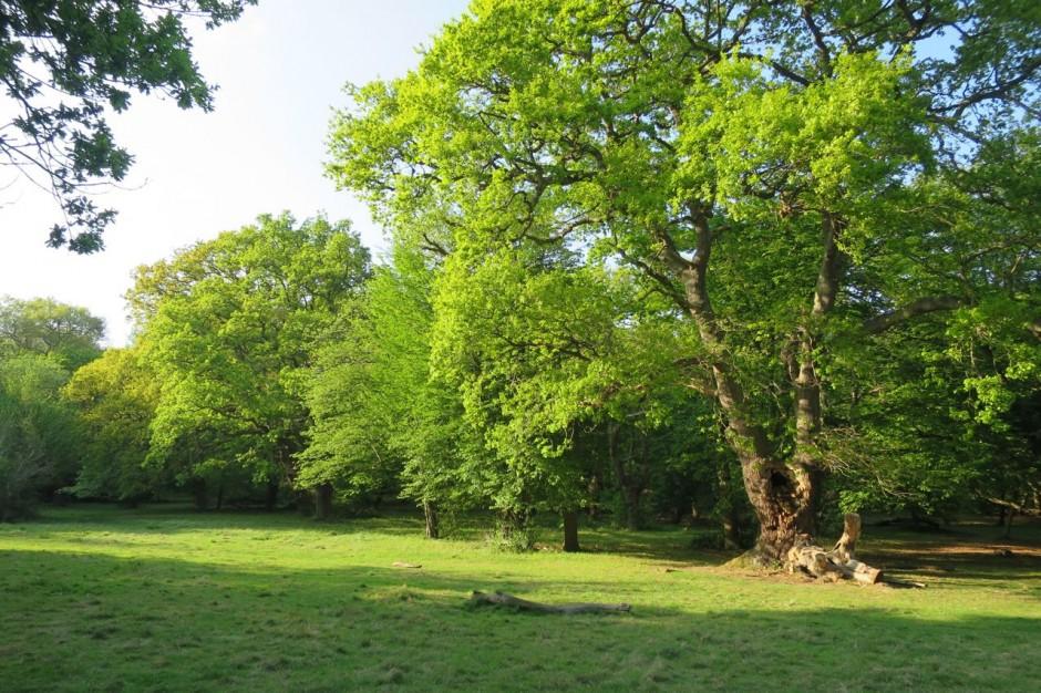 Debden Slade Epping Forest