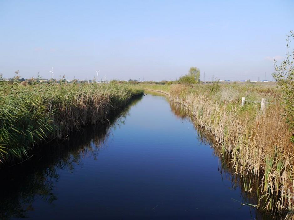 Rainham Marshes