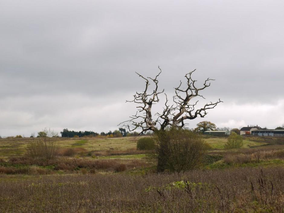 Theydon Bois Walk