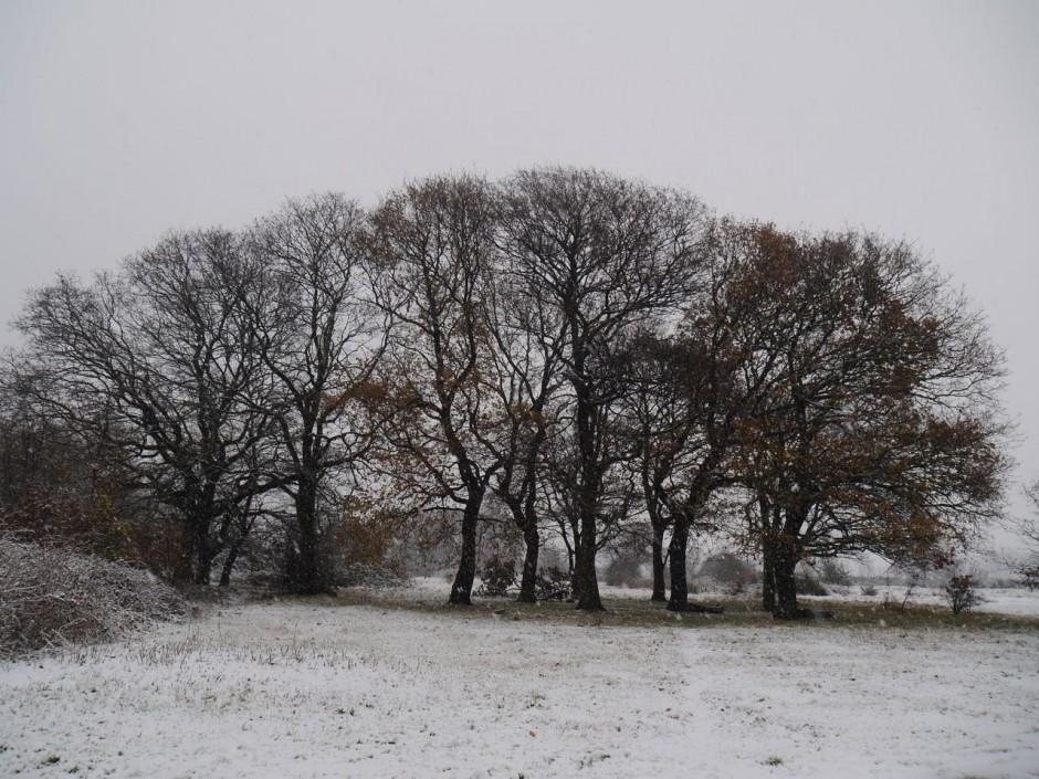 Snow on Wanstead Flats