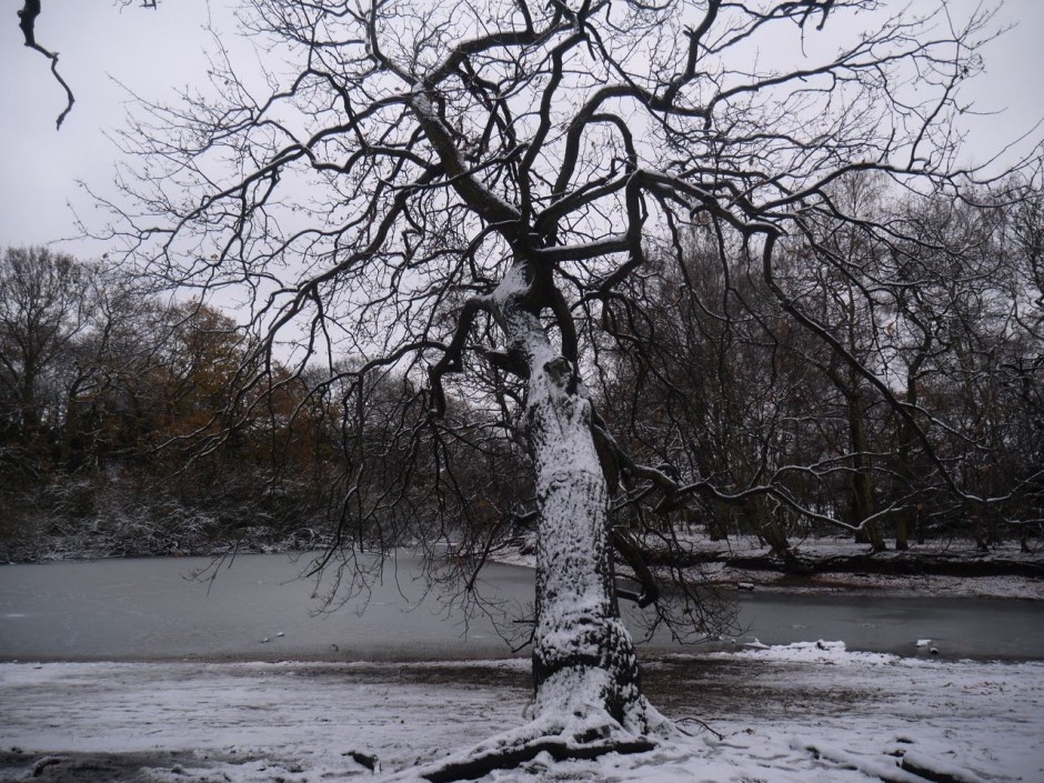 Alexandra Lake Wanstead Flats snow