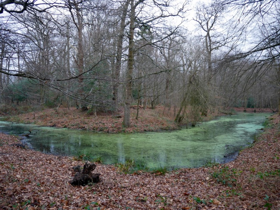 Camlet Moat Camelot
