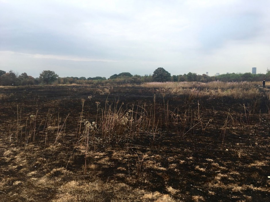 Wanstead Flats fire damage