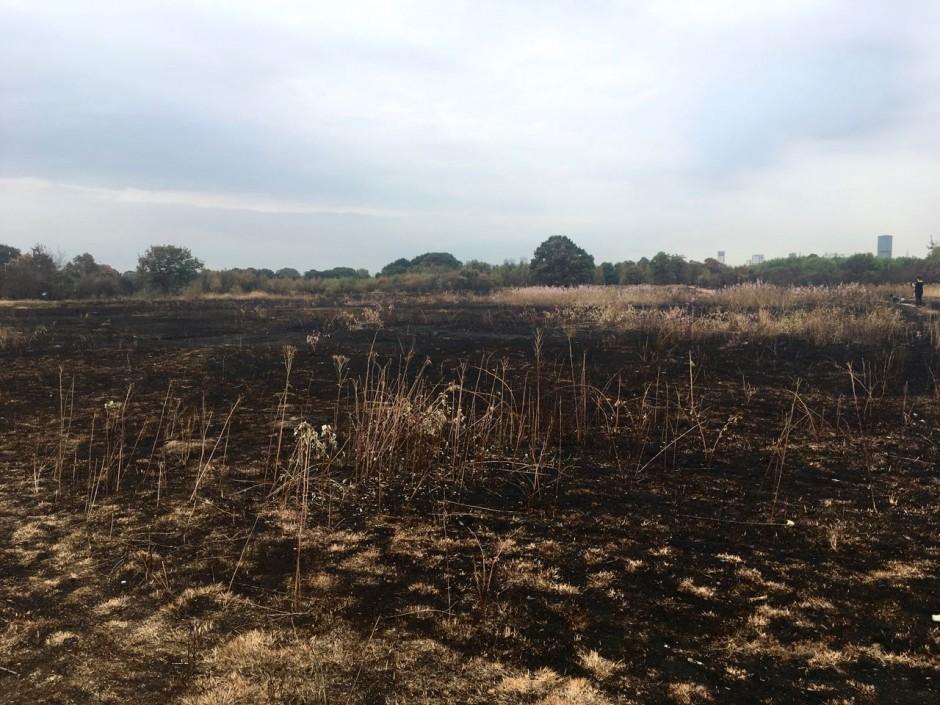Wanstead Flats fire damage