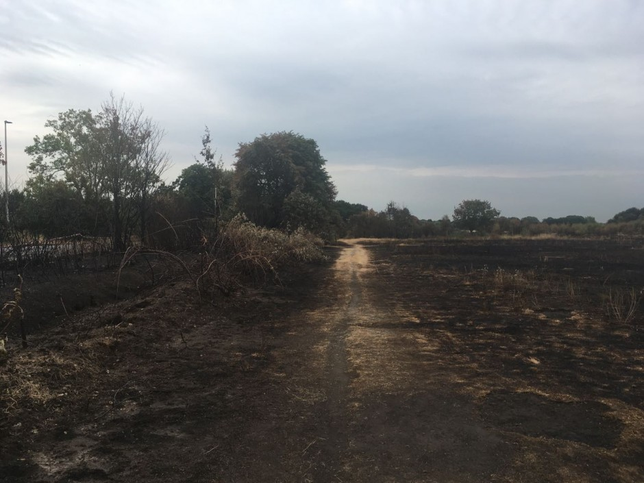 Fire damage on Wanstead Flats
